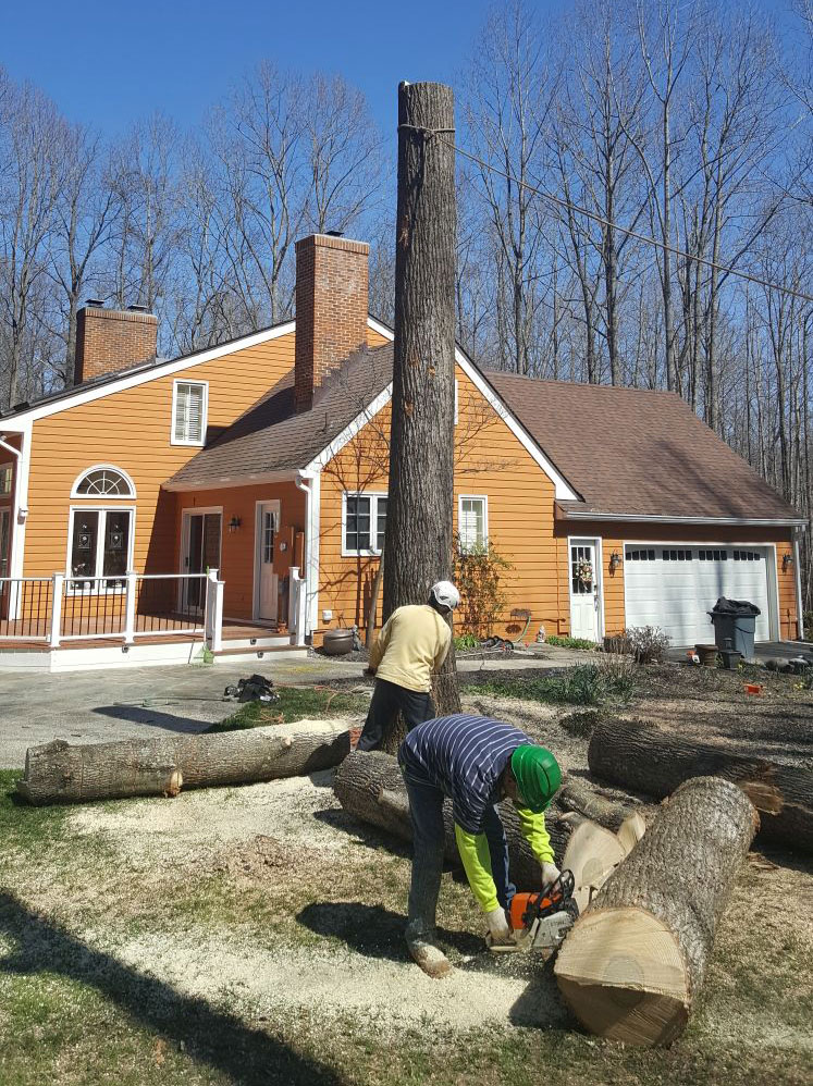 Services Jt Tree Service And Landscaping